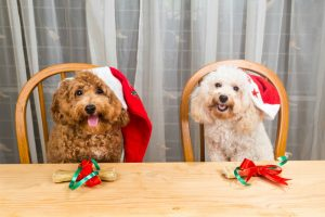 Family dog at the Christmas table